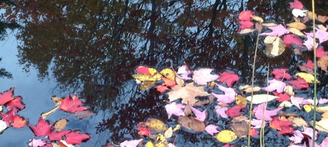 Small Pond in Woodbury, Vermont